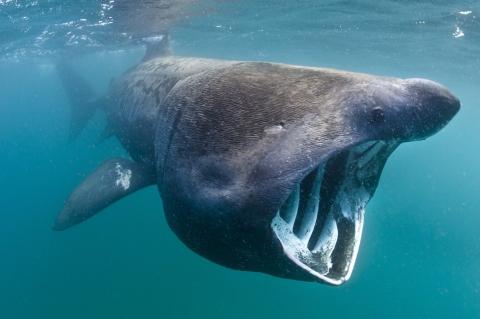 5 of the World's Weirdest Animals